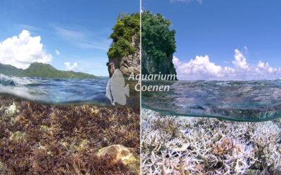 Oververhit aquarium?