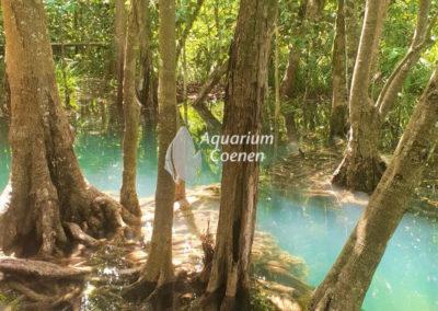 Aquarium-Coenen-Krabi-Thailand