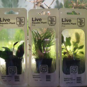 Planten in blister