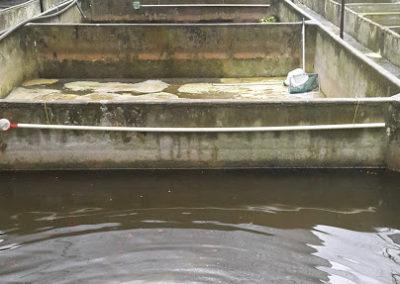 AquarAquariumblog Sri Lanka kweek zoetwatervissen