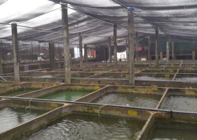 Aquariumblog Sri Lanka kweek zoetwatervissen