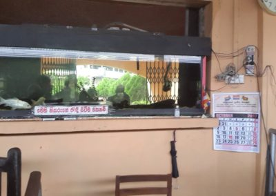 Blog Sri Lanka aquarium op perron