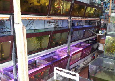 Aquariumblog Sri Lanka collegabedrijf