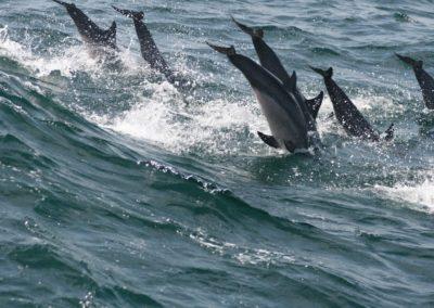 Aquariumblog Sri Lanka dolfijnen