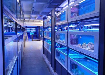 Zeewaterafdeling eerste etage