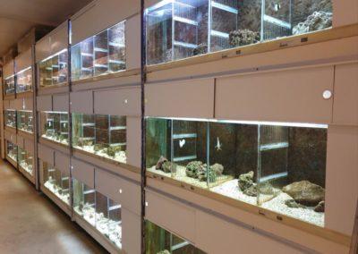Zeewaterafdeling galerij