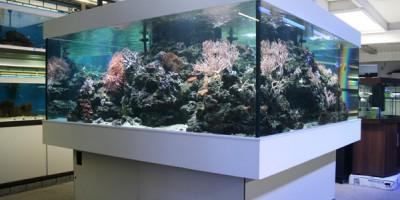 Aquarium Coenen Best showaquarium zeewater eerste etage