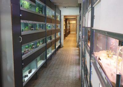 Zoetwaterafdeling aquariumvissen