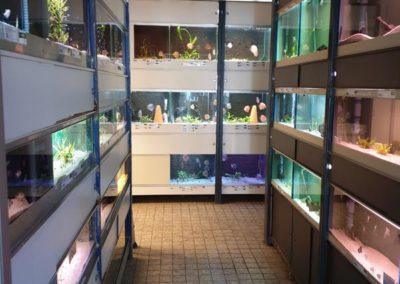 Aquarium Coenen Best tropische aquariumvissen uitkijkend op discusvissen