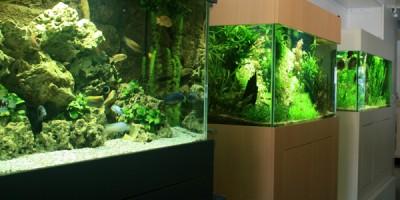 Aquarium Coenen Best Showaquaria zoetwater